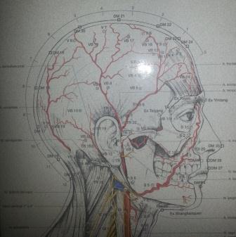 Agopuntura a Torino emicrania cefalee